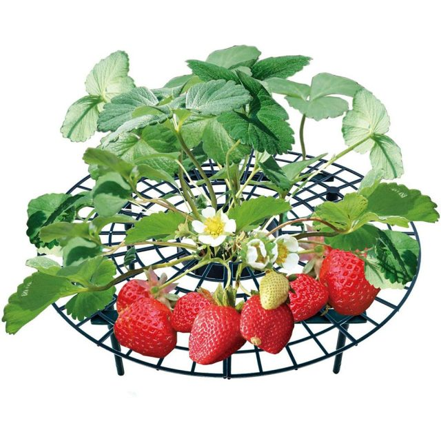 5/10/20 PCS Strawberry Stand Frame Holder Balcony Planting Rack Fruit Support Plant Flower Climbing Vine Pillar Gardening Stand